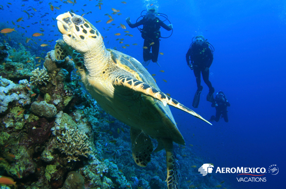 Mexico Cozumel DIVE AM Vacations MLT